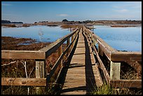 Boardwalk, Elkhorn Slough. California, USA ( color)