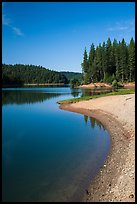 Lakeshore and pines, Jenkinson Lake. California, USA ( color)