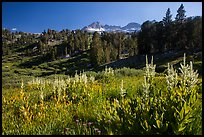 Meadows, trees, and Sierra Nevada crest, Twenty Lakes Basin. California, USA ( color)