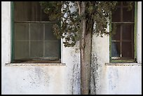 Old windows and tree, La Paz, Cesar Chavez National Monument, Keene. California, USA ( color)