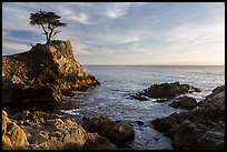 Lone Cypress, and cove, late afternoon. Pebble Beach, California, USA ( color)