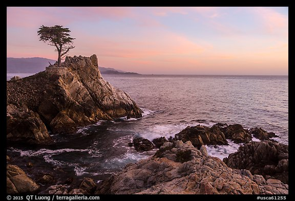 Lone Cypress tree at sunset. Pebble Beach, California, USA (color)