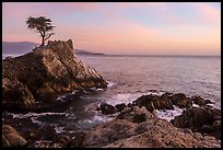 Lone Cypress tree at sunset. Pebble Beach, California, USA ( color)