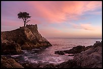 Lone Cypress and cove at sunset. Pebble Beach, California, USA ( color)