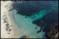 Aerial view of beach with marine life. Pebble Beach, California, USA ( color)