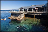 Observation deck and scuba divers, Monterey Bay Aquarium. Monterey, California, USA ( color)