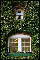 Windows with ivy, Korbel Champagne Cellars, Guerneville. California, USA ( color)