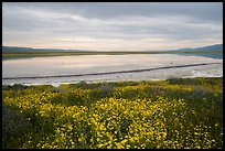 Wildflowers and pond. Carrizo Plain National Monument, California, USA ( color)