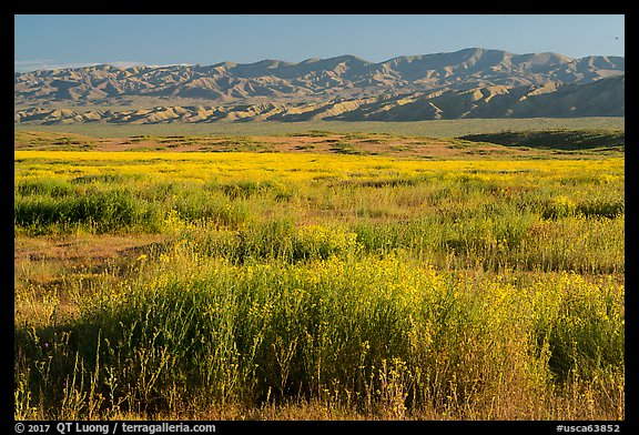 Valley floor covered by flowers, and Temblor Range. Carrizo Plain National Monument, California, USA (color)