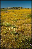 Wildflowers and Caliente Range. Carrizo Plain National Monument, California, USA ( color)