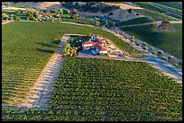 Aerial view of vineyard and winery in summer. Livermore, California, USA ( color)