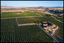 Aerial view of vineyards and wineries in summer. Livermore, California, USA ( color)