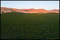 Aerial view of vineyards and hills at sunset. Livermore, California, USA ( color)