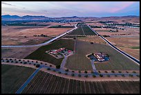 Aerial view of vineyards and wineries in summer, sunset. Livermore, California, USA ( color)