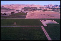 Aerial view of vineyards and hills at dusk. Livermore, California, USA ( color)