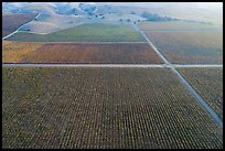 Aerial view of multicolored vineyards in autumn. Livermore, California, USA ( color)