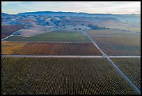 Aerial view of multicolored vineyards and hills in autumn. Livermore, California, USA ( color)