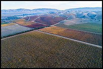 Aerial view of multicolored vineyards and hills in the fall. Livermore, California, USA ( color)