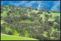 Hillside with oaks in winter, Del Valle Regional Park. Livermore, California, USA ( color)