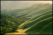 Oaks and ridges, late afternoon, Del Valle Regional Park. Livermore, California, USA ( color)