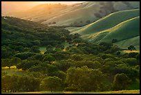 Oaks and hill ridges, spring, Del Valle Regional Park. Livermore, California, USA ( color)