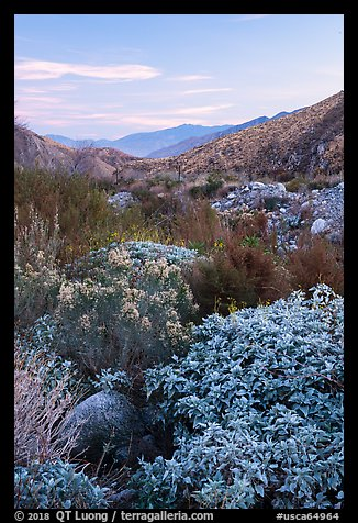Lush riparian vegetation, Whitewater Preserve. Sand to Snow National Monument, California, USA (color)