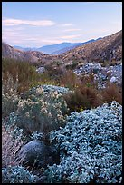 Lush riparian vegetation, Whitewater Preserve. Sand to Snow National Monument, California, USA ( color)