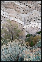 Riparian vegetation and cliffs, Whitewater Preserve. Sand to Snow National Monument, California, USA ( color)
