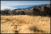 Grassy meadow and San Gorgonio Mountain in winter, Big Morongo Canyon Preserve. Sand to Snow National Monument, California, USA ( color)
