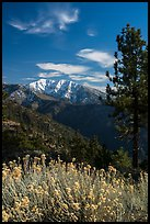 Snow-capped Mount Baldy. San Gabriel Mountains National Monument, California, USA ( color)