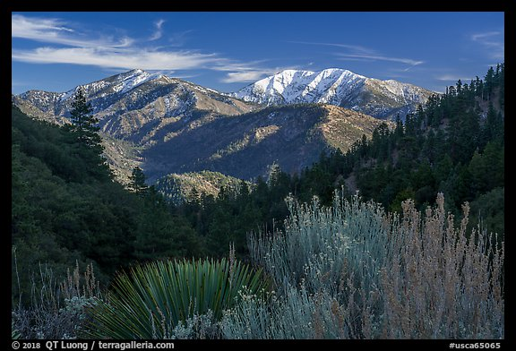 Desert shrubs, pine forests, and  Mount San Antonio. San Gabriel Mountains National Monument, California, USA (color)