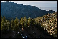 Pine trees and ridges. San Gabriel Mountains National Monument, California, USA ( color)