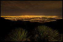 Succulents and lights of Los Angeles at night from Mount Wilson. San Gabriel Mountains National Monument, California, USA ( color)