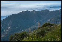 Mountains above low clouds from Mount Wilson. San Gabriel Mountains National Monument, California, USA ( color)