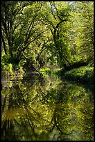 Trees and reflections in Eticuera Creek. Berryessa Snow Mountain National Monument, California, USA ( )