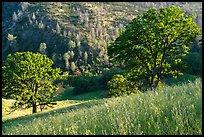 Ridge top view in spring, Cache Creek Wilderness. Berryessa Snow Mountain National Monument, California, USA ( )