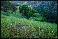 Wildflowers, oak trees, and valley in the spring, Cache Creek Wilderness. Berryessa Snow Mountain National Monument, California, USA ( )