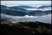 Ridges and low clouds, Snow Mountain Wilderness. Berryessa Snow Mountain National Monument, California, USA ( )