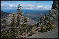 Pines and rocks, Snow Mountain Wilderness. Berryessa Snow Mountain National Monument, California, USA ( )