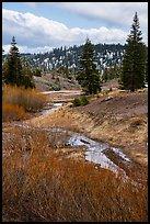 Stream bordered by shrubs with autumn color, Snow Mountain. Berryessa Snow Mountain National Monument, California, USA ( )