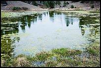 Pond with aquatic plants, Snow Mountain Wilderness. Berryessa Snow Mountain National Monument, California, USA ( )