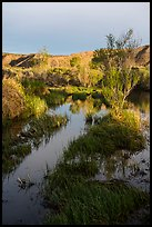 Mojave River crossing at sunrise. Mojave Trails National Monument, California, USA ( color)
