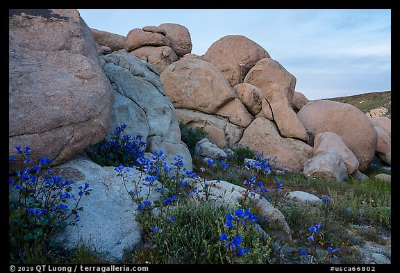 Wildflowers and boulders. Sand to Snow National Monument, California, USA (color)
