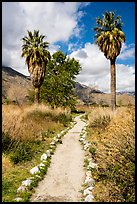 Path and palm trees, Whitewater Preserve. Sand to Snow National Monument, California, USA ( color)