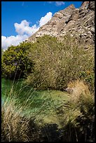 Pond and cliffs, Whitewater Preserve. Sand to Snow National Monument, California, USA ( color)