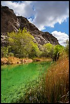 Pond, trees in spring, and cliffs, Whitewater Preserve. Sand to Snow National Monument, California, USA ( color)
