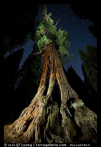 Boole Tree from the base and stars. Giant Sequoia National Monument, Sequoia National Forest, California, USA (color)