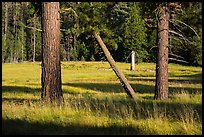Pine trees in meadow, Indian Basin. Giant Sequoia National Monument, Sequoia National Forest, California, USA ( color)