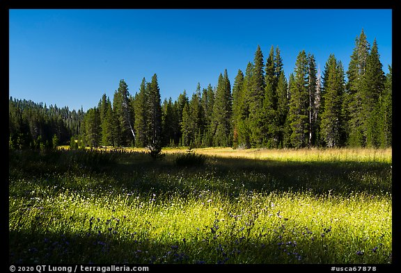 Big Meadows. Giant Sequoia National Monument, Sequoia National Forest, California, USA (color)