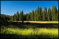 Big Meadows. Giant Sequoia National Monument, Sequoia National Forest, California, USA ( color)